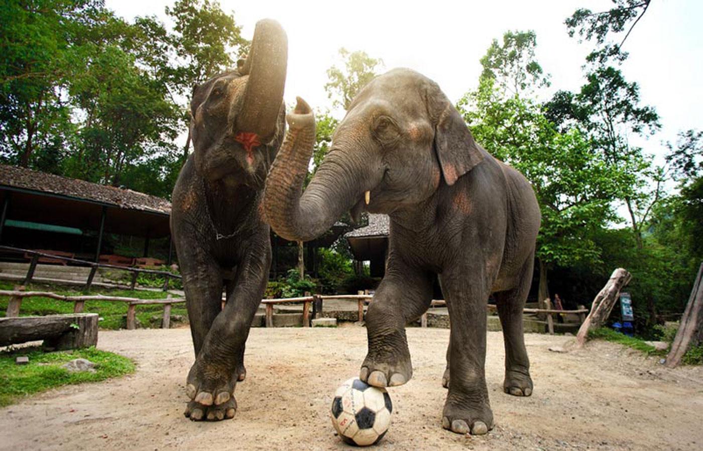 ปางช้างแม่แตง