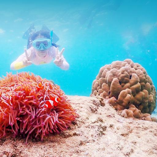 ดำน้ำชมปะการัง